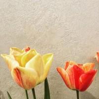 Loving these spring afternoons! Featuring our Iridescent Lithos finish #viero #vierouk #interiordesign #plasterfinish #luxuryinteriors #bespokeinteriors #surfacedesign #architecture #spring #tulips #architects #texturedwalls